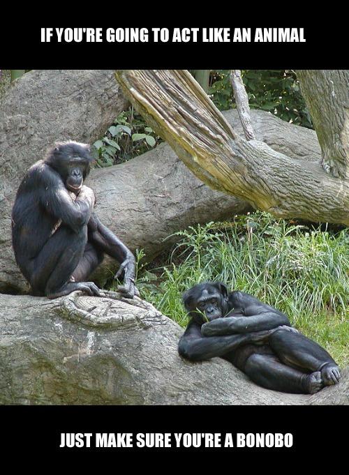 Bonobo's Rock!