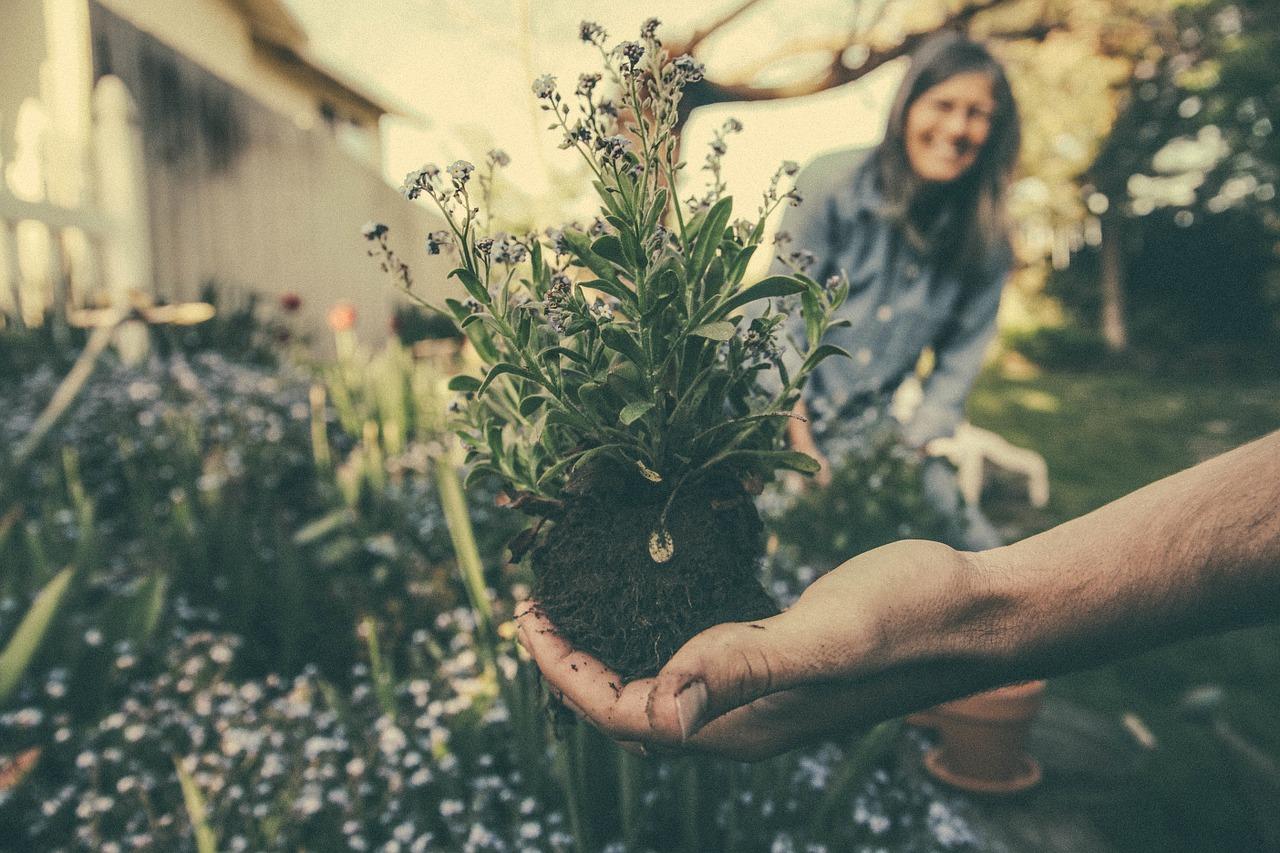 Psychology of Gardening