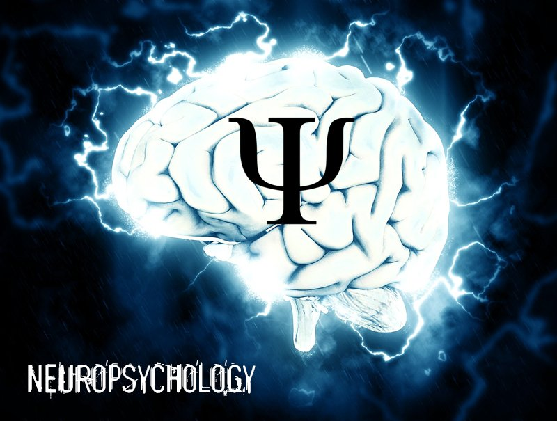 Neuropsychology information and resources. Learn all about the fascinating branch of psychology which explores the relationships between the brain and behavior.
