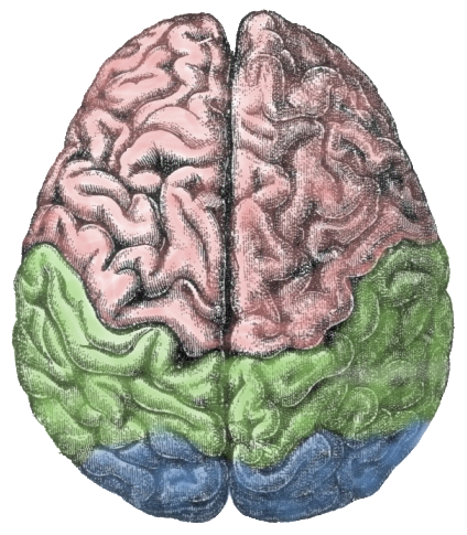 The executive brain. Excellent article by Dr. Kevin Fleming on the challenges facing the human brain's frontal lobe in today's dynamic world of information overload and multitasking.